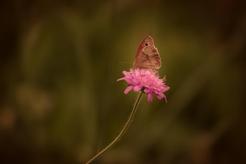 butterfly-1576736_1280