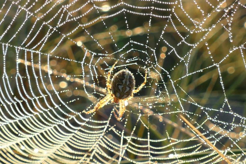 spider-web-1599476_1920