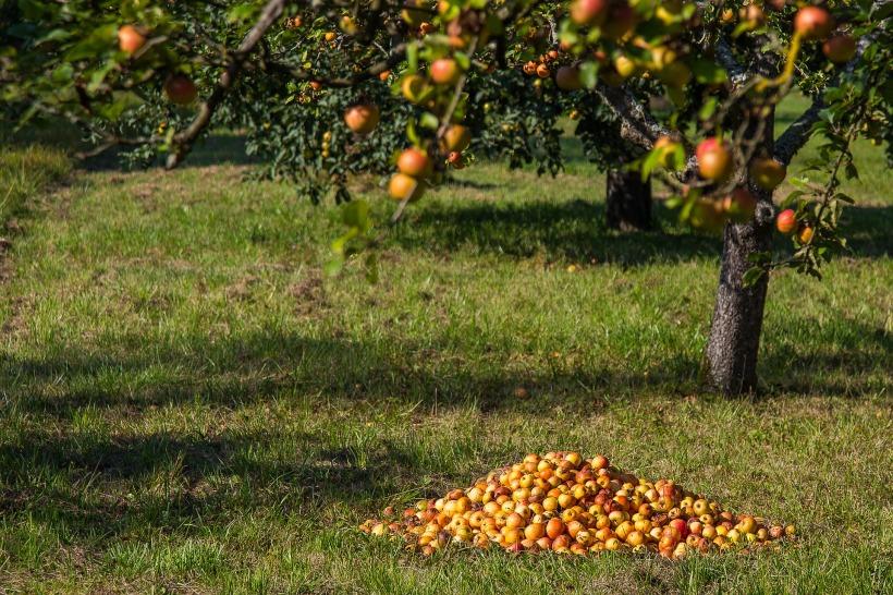 apple-1696195_1920