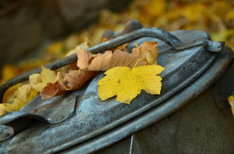 autumn-1013608_1920