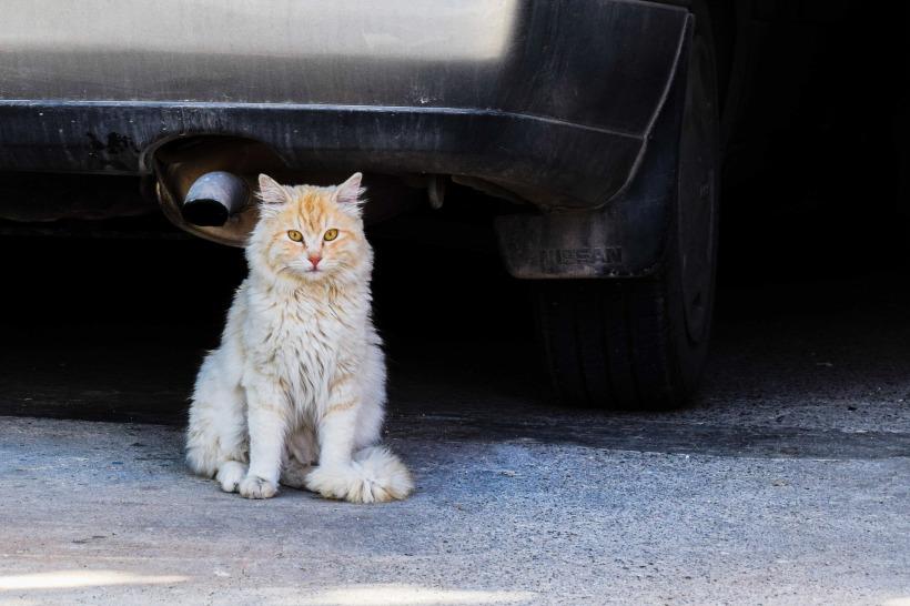 cat-2206192_1920