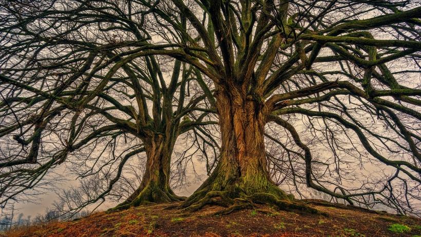 tree-3097419_1920 (1)