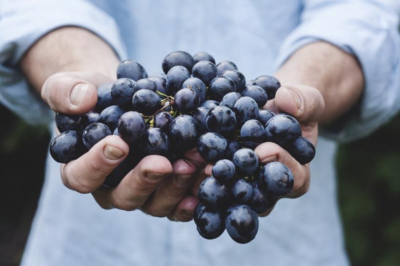 grapes-690230_1920 (1).jpg