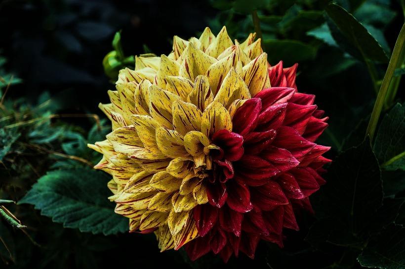 flower-888401_1920