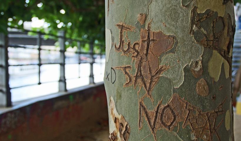 tree-bark-1209874_1920.jpg