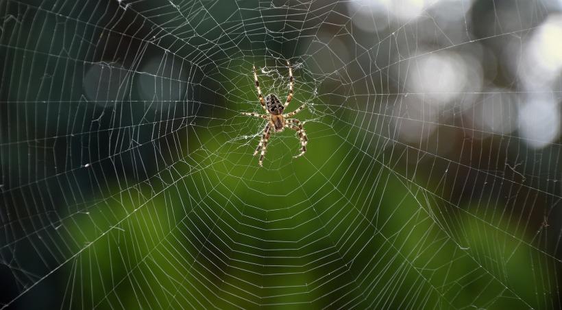 spider-3658386_1920.jpg